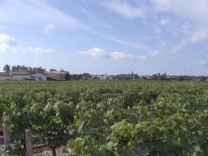 2004_Medoc Landschaft 1