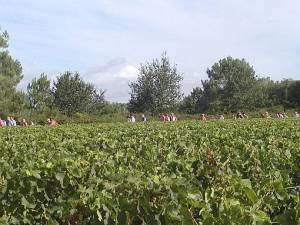 2004_Medoc Weinwanderung